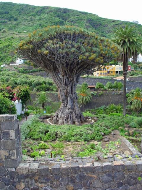 Вокруг света - остров Тенерифе