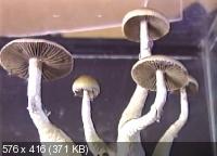 http://i57.fastpic.ru/thumb/2013/0918/26/a25c88926ac248e54408ffa1d4ae0b26.jpeg