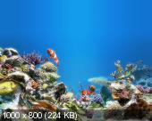 Sim Aquarium 3.6 Build 53 Premium