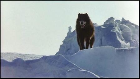 VANGELIS - Antarctica  1983, Vinyl-rip, CD-rip, Film