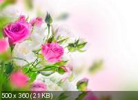 Красивые цветы в сборнике обоев для рабочего стола. Часть 3