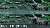 Без черных полос (На весь экран) Земля медведей в 3Д / Land of the Bears 3D (Звуки природы)  Вертикальная анаморфная
