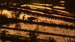 Живые Пейзажи: (Бали) (2006) BDRip 1080p
